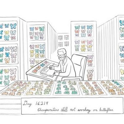 Cartoon: Acupuncture for Butterflies from New Yorker