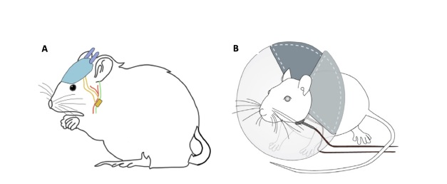 TAVNS in Mice with Ear Pod improves memory challenges