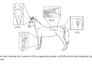 diagram of horse acupuncture points